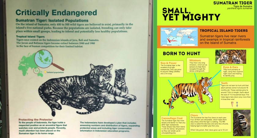Toronto Zoo-Storyworks-Tiger.png