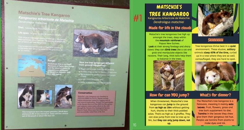 Toronto Zoo-Storyworks-Kangaroo.png