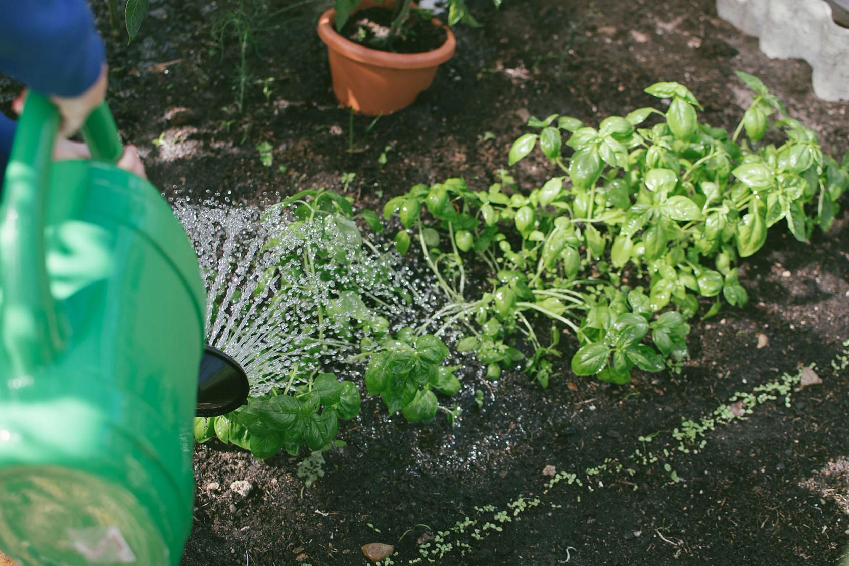 gardening-sustainability-blog.jpg