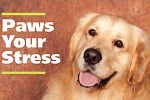 Therapy comes on four legs at Paws Your Stress Image