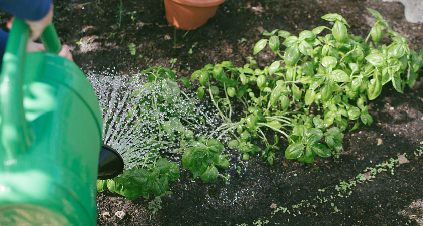 #Centennialtips on Getting Your Garden Started Image