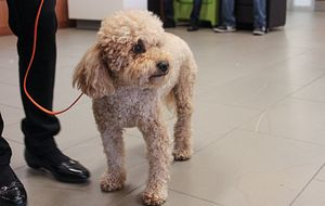 picture of a dog at the paws your stress event at progress campus